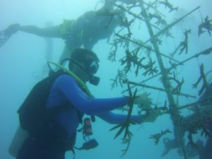 Coral Cleaning