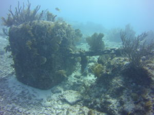 The Anchor chain at Elbow reef is the old mooring from the lightship. This image shows the old block of concrete with chain attached