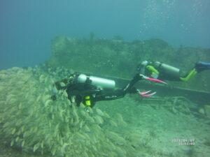 Diver watching school of fish underwater